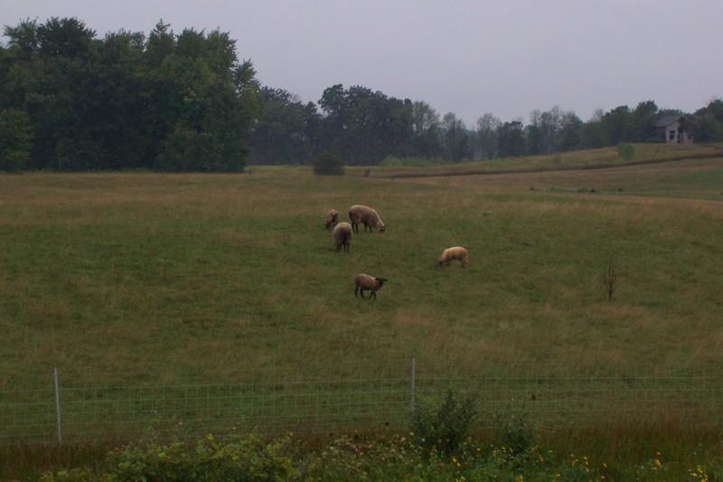 Sheep_corner_of_us12_and_m52